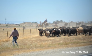Rancho Murieta Cowboys photo by Lindsay McCall