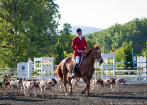 Parade Of Tryon Hounds