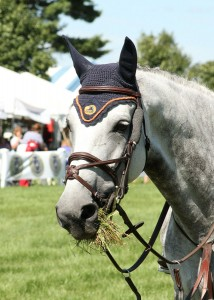 The beautiful grass grand prix field at the Silver Oak Jumper Tournament was popular with the riders and with the horses as well - photo by  Kenneth Kraus.