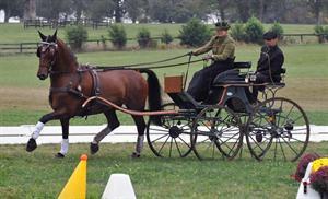 Leslie Berndl, USEF National Single Horse Driving Champion (Pics of You)