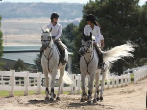 Three grays on their way to the jumper schooling arena. Photo by Carrie Wirth