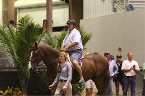 Don Stewart participated in the Parent Lead Line class at the 2013 Southeast Medal Finals.  Photo by Carrie Wirth