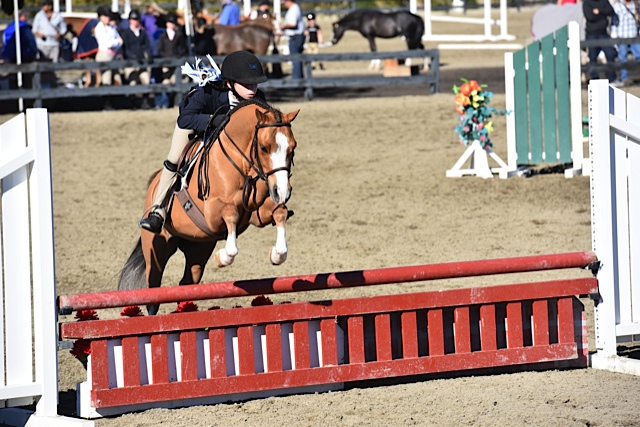 Sydney Flashman riding Alliance Bowregard at HITS Thermal. (Photo courtesy of Sydney Flashman)