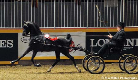 Photo 24 - The Spiderman driven by Rodney Hicks and owned by Edward Ochsenschlager took the top place in the Royal Horse Show Hackney Pony Canadian Championship Stake class. Photo by Kim MacMillan/MacMillan Photography
