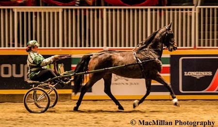 Photo 25 – Winners of the $3000 OHHA Green Roadster Classic to Bike Finals Presented by Little Rascals Daycare was Girl Crush owned by Jim McKague and driven by Jan McKague-Weishar. Photo by Shelley Higgins/MacMillan Photography