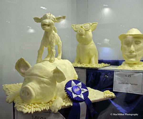 "Photo 36 - The Royal butter sculpture competition is very popular with spectators. This year's second-place entry (in Canada a blue ribbon is second place) was called ""Totes-Ma-Goats"" by Vincenzina Care. Photo by Shelley Higgins/MacMillan Photography"