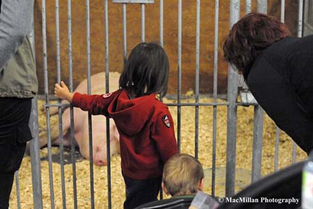 Photo 39 – Young Royal Fair attendees were fascinated by the pig on display in the Royal livestock barns. A 4-H Hog Show is part of the action each year at the Royal.Photo by Sarah Miller/MacMillan Photography