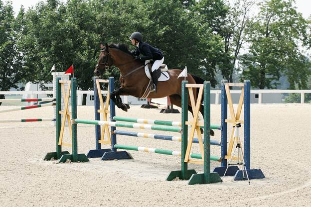 Bait n Switch in the New Vocations Thoroughbred Mini Prix