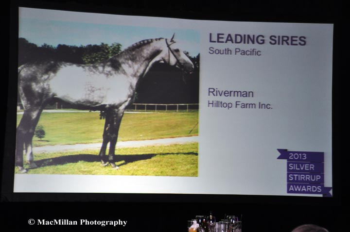 Riverman-owned-by-Hilltop-Farm-took-leading-jumper-sire-honors-at-the-Silver-Stirrup-Awards
