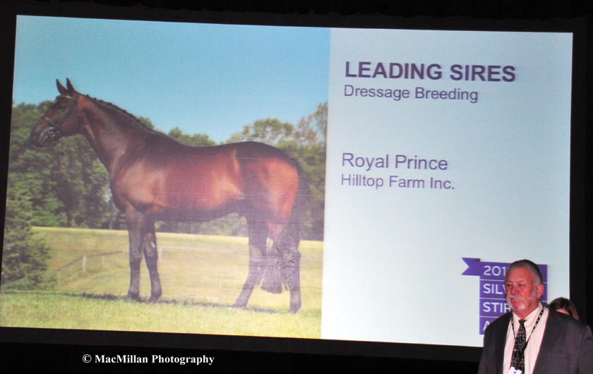 Hilltop-Farms-Royal-Prince-was-the-Leading-Dressage-Sire-at-the-Silver-Stirrup-Awards