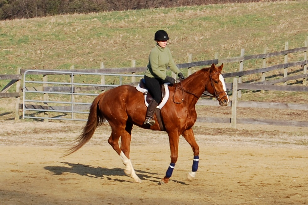 National Standard after he was purchased in 2012 by his new owner.  He looks happy!
