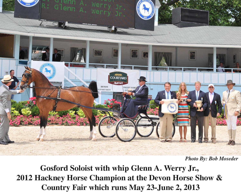 Hackney horse champ