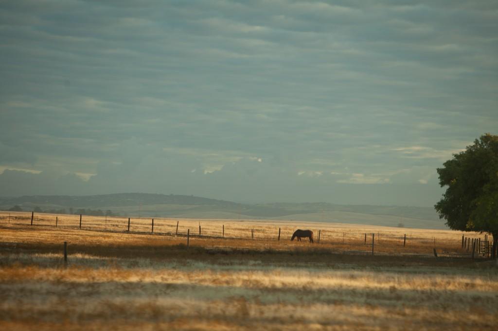 Rancho Murieta countryside