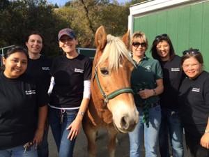 Ariat Volunteer Team at Xenophon Therapeutic Riding Center in Orinda.