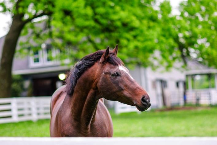 Kentucky Horse Park Photo By James Shambhu