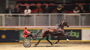 """13-The """"Road Horse"""" classes feature Standardbred race horses complete with sulkies and racing silks."""