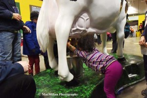 "34-A little girl tries her hand at milking a cow in ""Ag-Tivity Central"" in the middle of the Royal Marketplace."