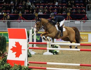 Flying over the Maple Leaf jump is the nine-year-old Dutch Warmblood gelding Appy Cara, owned by Angelstone Partners and ridden by Erynn Ballard of Tottenham, Ontario. Just a year and a half after a horrible fall left Ballard with many broken bones, potential nerve damage and a doctor warning her to give up riding, Ballard amazed even herself at her return to riding and her success in returning to the jumper ring. They took second in the opening round of the Greenhawk Canadian Show Jumping Championships on the first night of the Royal Horse Show.Photo by Shelley Higgins/MacMillan Photography