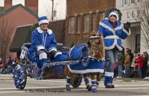 10-Art Brown, Rocky Creek Farms, Middle Point Ohio, proudly drove his blue and white clad Appaloosa Mini Gingersnap down Broadway during the parade.