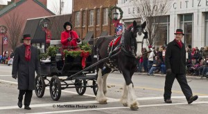 13-Resembling the previous Mini in color and markings, only in extra large size, this Clydesdale named Guiness pulled an Amish cart driven by his owner Karen Greene of Hillcroft Crescent Farm, South Charleston, Ohio. Karen and Guiness are accompanied by Don Marion walking alongside the cart. This was their first appearance in the Lebanon Christmas Parade.