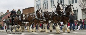 17-Making their seventeenth appearance in the Lebanon Christmas Carriage Parade was the six-horse Clydesdale team from Old Tyme Travel driven by Debbie Bechstein. The hitch was sponsored by Trihealth.