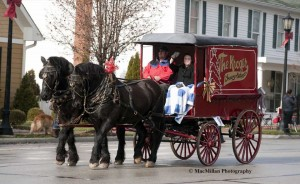 5-The Kroger grocery store chain owns an original Barney delivery wagon which was driven in the parade by Stan Voorhees. The wagon was used by the original Kroger family store based in Cincinnati, Ohio, in the late 1880's. The wagon was pulled by two Percherons.