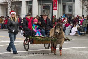 8-Steve Muterspaw of Lebanon drove his Mini mare Jenny to a sulky in this year's parade. Steve's passengers were his wife Susan and granddaughter Leanne Nicole Hawkins. Take note of Jenny's Christmas socks!