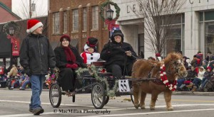 9-This adorable Mini mare Savannah, who wore a festive garland around her neck, pulled a cart driven by her owner Karen Dalton, Franklin, Ohio, who was accompanied by her grandchildren.