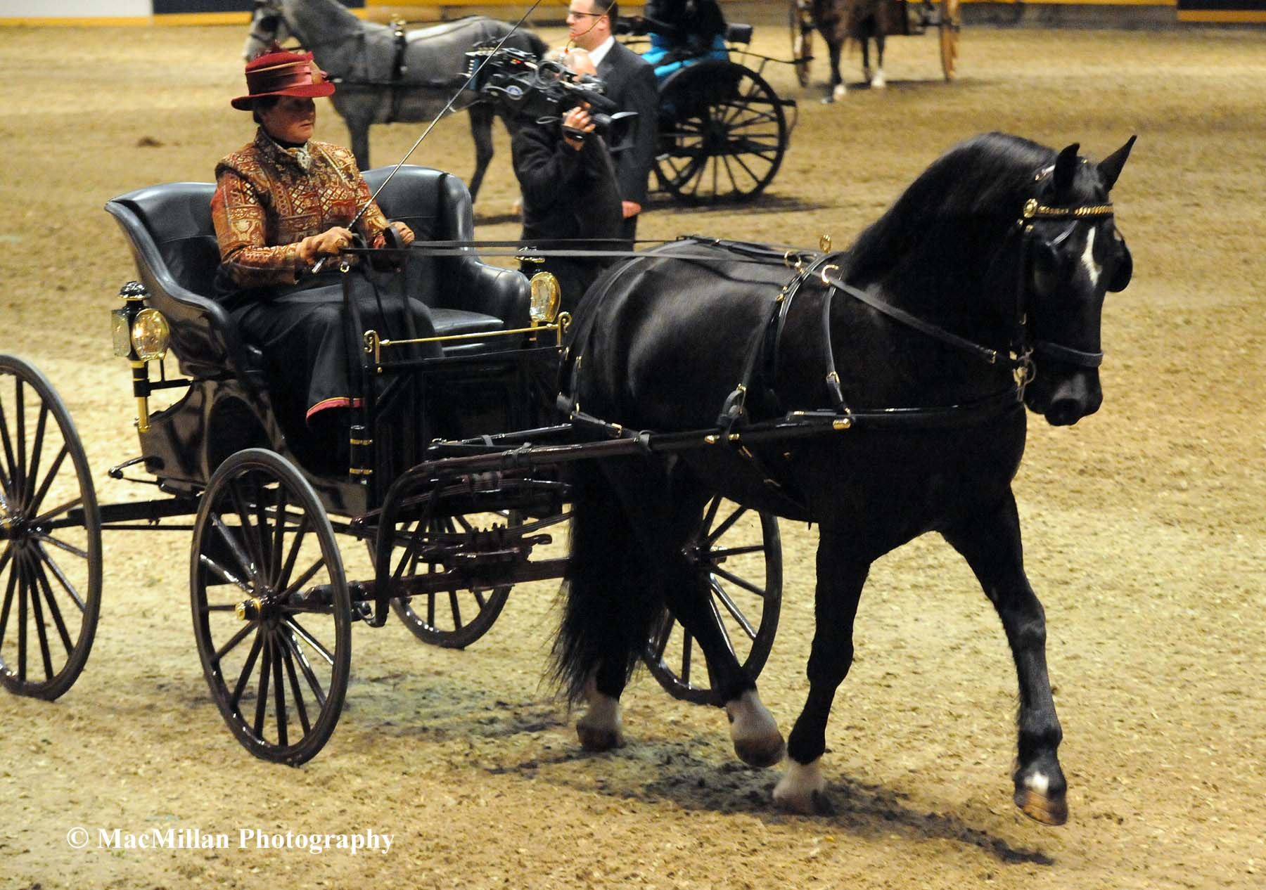 Photo 16 – Welsh Ponies and Cobs were part of the action at the 2015 Royal Winter Fair Horse Show with breed classes and under saddle and driving competition. This lovely black Welsh Cob and his driver were participants it the Welsh Pleasure Driving class.Photo by Kim MacMillan/MacMillan Photography