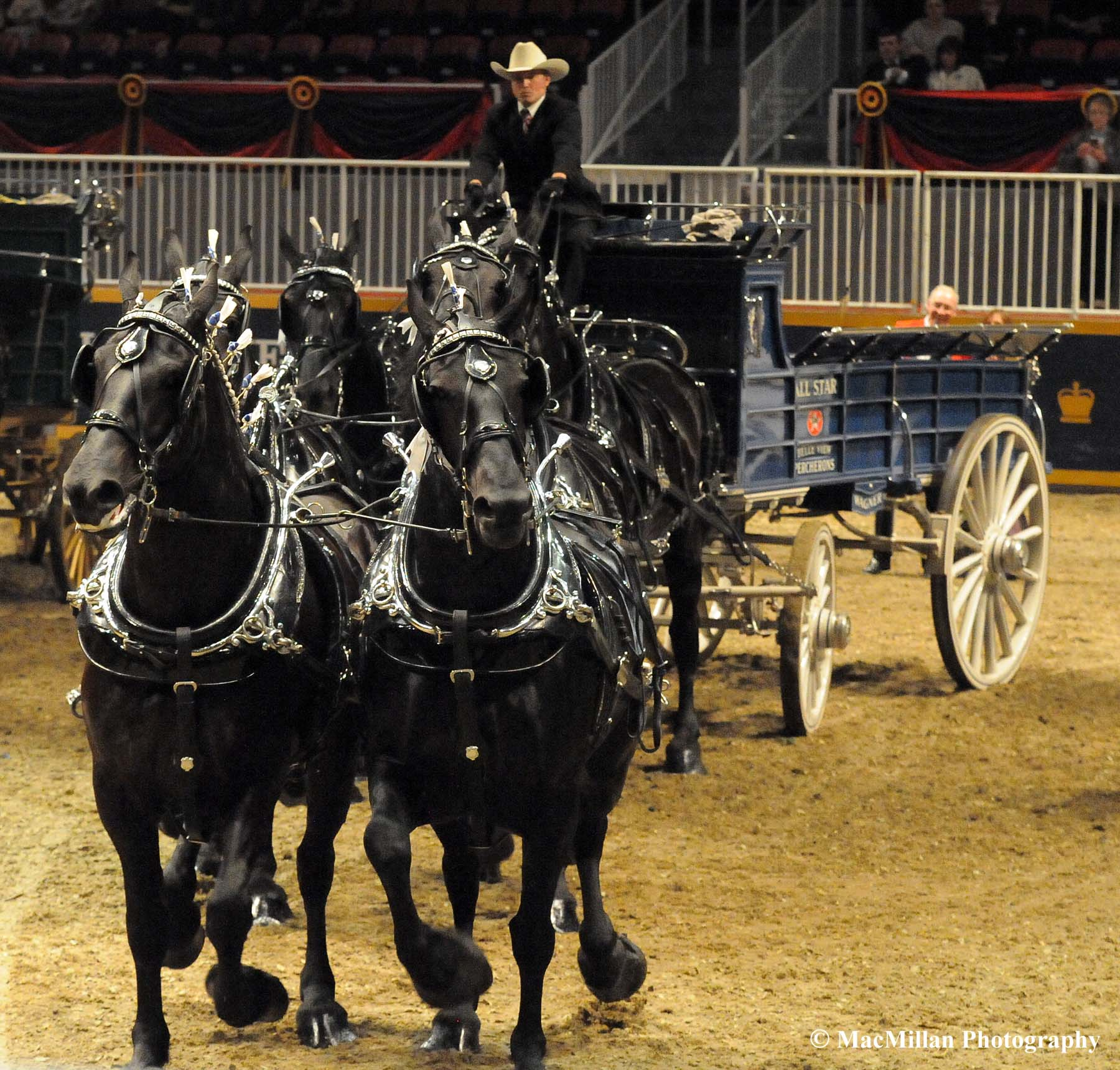 Photo 22 – Driver Ross Honsberger and the All Star Percheron Six-Horse Hitch won the Six-Horse Hitch Championship at the 2015 Royal Horse Show in Toronto. The All Star Percherons six-horse hitch was made up of all mares, listed from the driver's perspective (position in hitch, name and age): right wheel horse, Kate, 9; left wheel horse, Mitsy, 9; right swing horse, Candy, 5; left swing horse, Xena, 5; right lead horse, Tory, 5, and left lead horse, Queen, 9. The All Star wagon was made in 2006 by the Hanson Wheel Wagon Works and they purchased it from Creelman Percherons in Nova Scotia. Photo by Kim MacMillan/MacMillan Photography