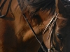 fran-riding-7-11-12-040