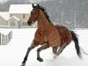 booker-snow