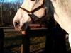 supermodel_contest_supermodel-horse-hugo