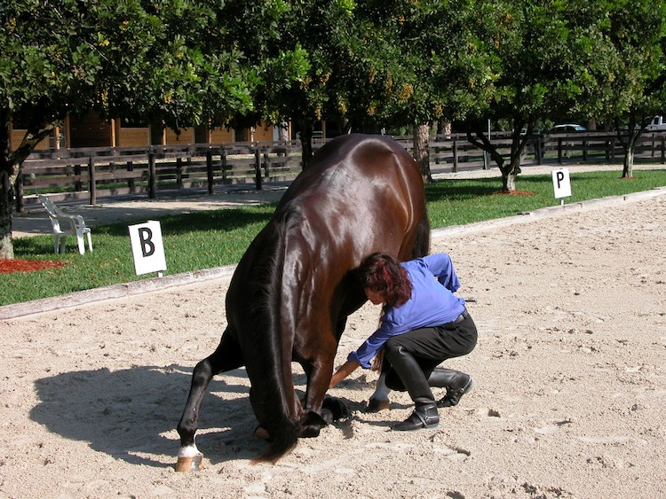 Jeanette and Valiant working on his bow. Photo by Marilyn Fallon