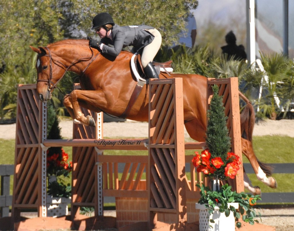 Devon and Cliveden, owned by Georgia Claessens, showing in Regular Conformation Hunters over fences in 2011 at HITS Thermal. Photo by Flying Horse Photography LTD 2011