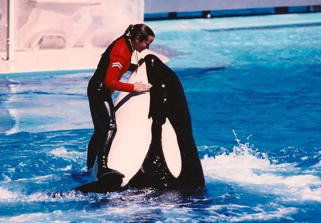 Shawna made the leap from killer whale trainer to horse trainer, using positive reinforcement. Photo by David Roberts