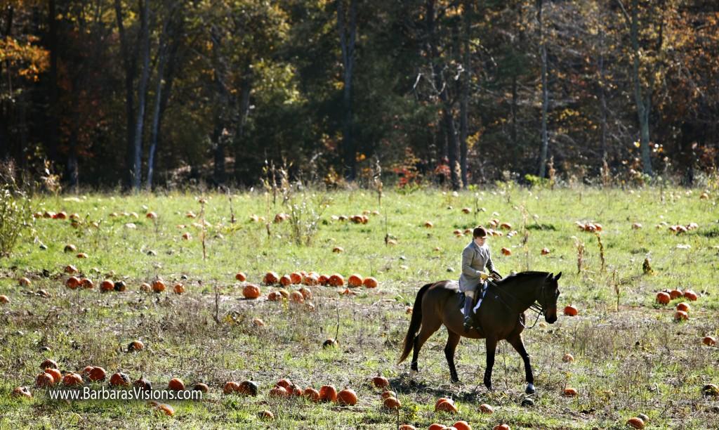 Rita Mae riding through a pumpkin patch during a cub hunt. Photo by Barbara Bower, www.barbarasvisions.com