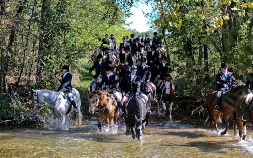 The field of riders of Harvard Fox Hounds returning from an opening hunt. Photo by Lisa Jewel at artbyjewell.com