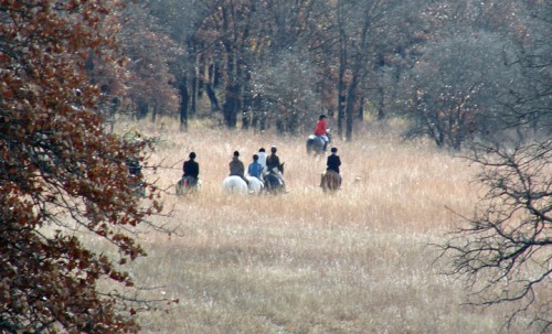 Harvard Fox Hounds hunt club following hounds. Photo by Michael Foster