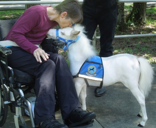 A patient at UF Health Rehab Hospital spends a sweet moment with a Gentle Carousel Miniature Therapy Horse.