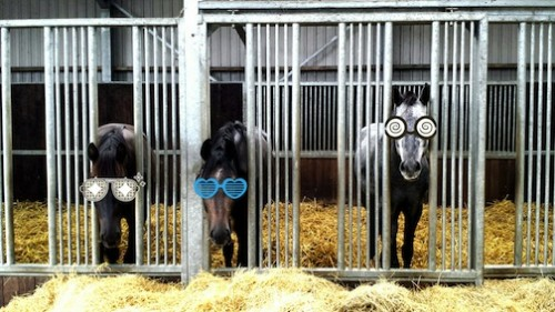 Fashionable Baby Linus, on the right, in Holland, thus the reason for buying him!