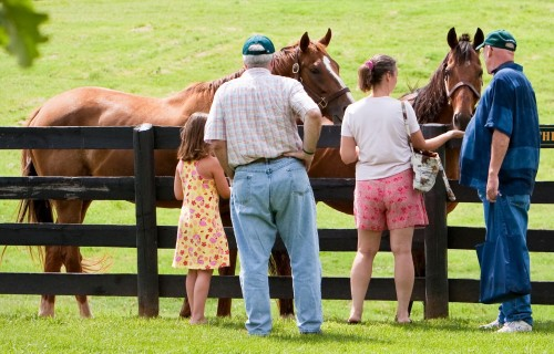 "Danthebluegrassman (chestnut) and Flick reign in the nearest paddock where the congenial geldings ""meet and greet"" admiring visitors. Photo by www.EquiSportPhotos.com"