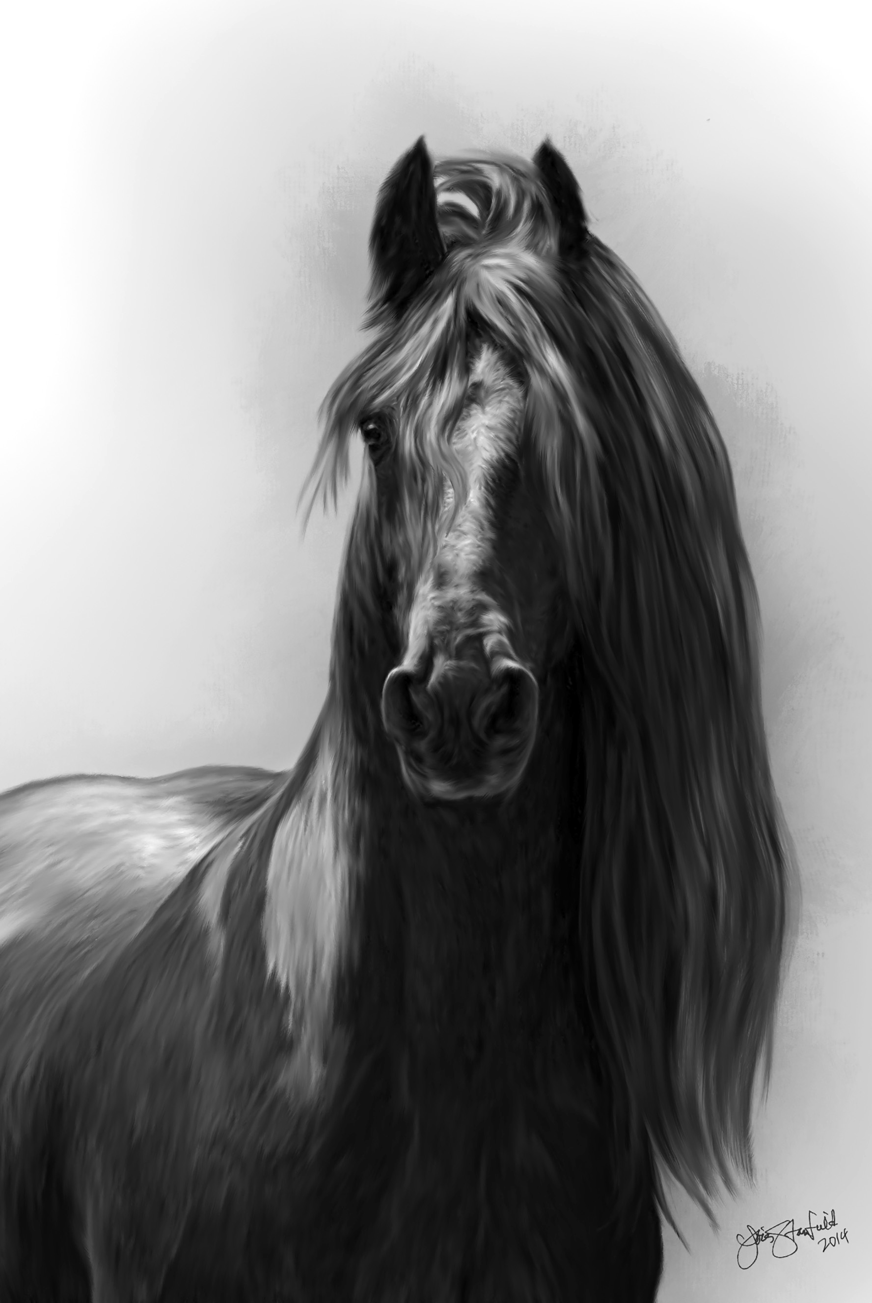 Friesian (Photo courtesy of Lois Stanfield)