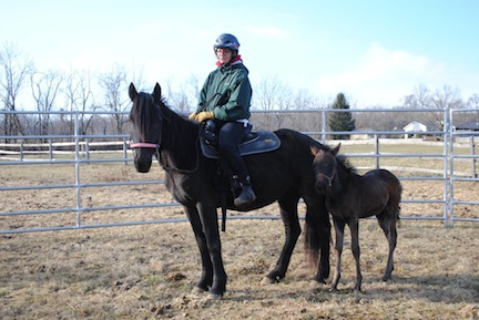 Look who's available for adoption and looking for their forever homes – Adara, rescued from New Holland, and her foal, Whisper. (Photo courtesy of Charming Acres Rescue)