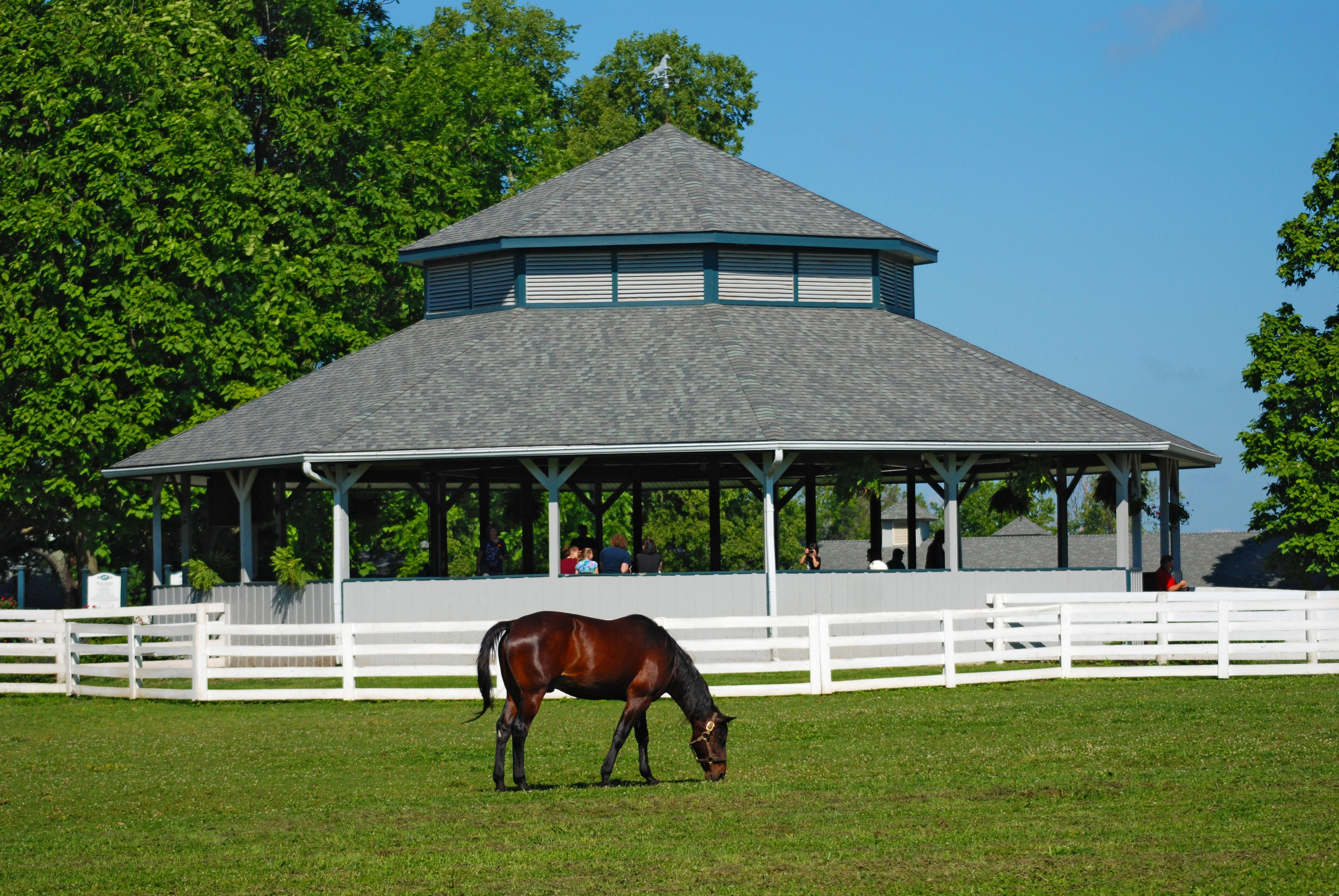 Scenes from The Kentucky Horse Park. (Photos courtesy of The Kentucky Horse Park)