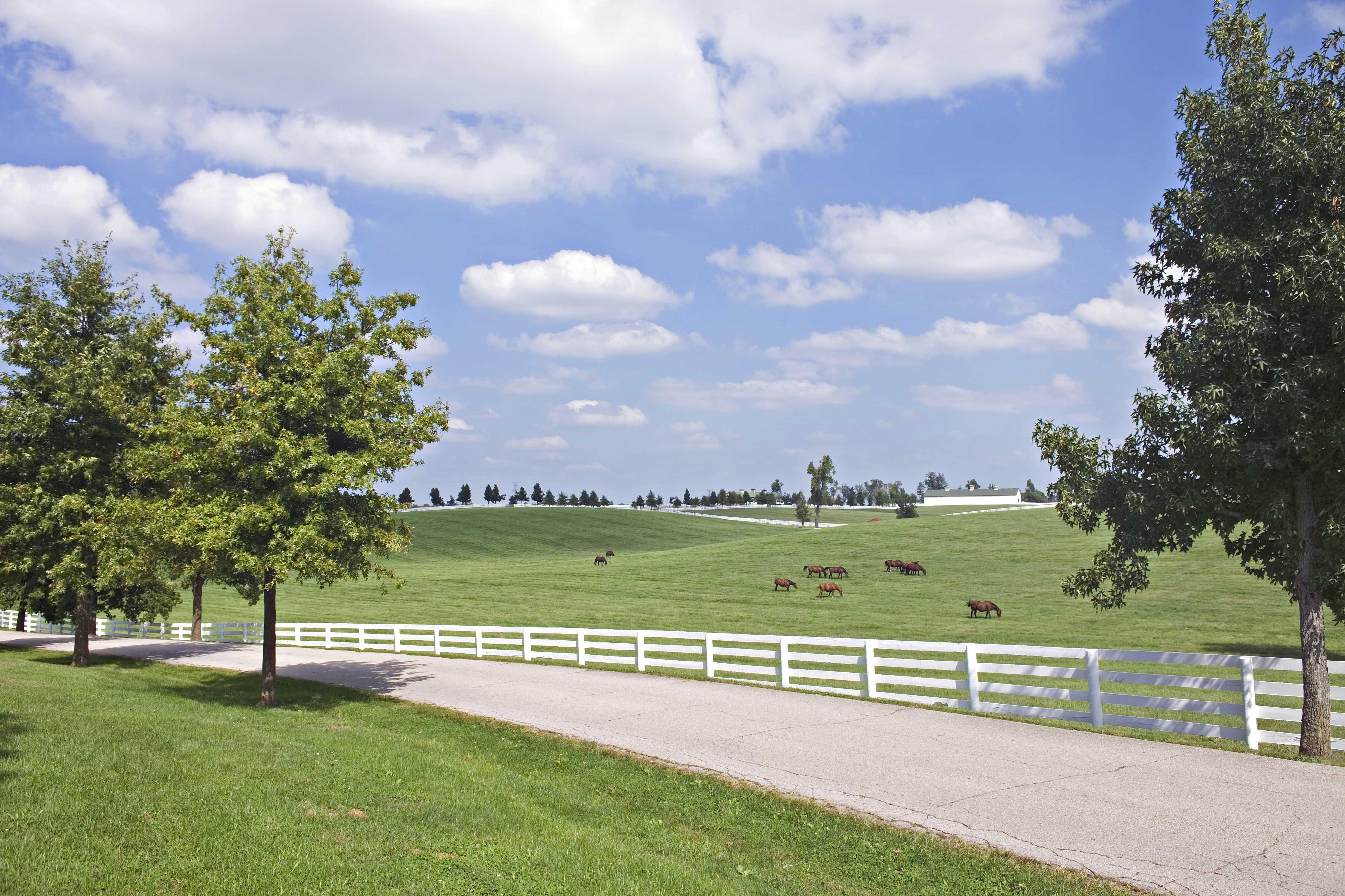Kentucky 8