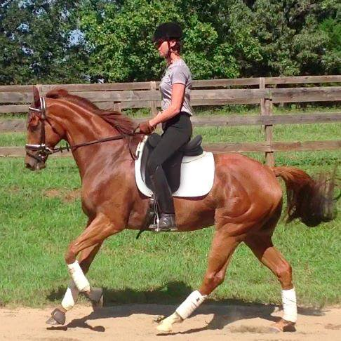 Forrest demonstrates his uphill movement — which is what Pam noticed in his racing video when she decided to purchase him. (Photo courtesy of Pam Stone)