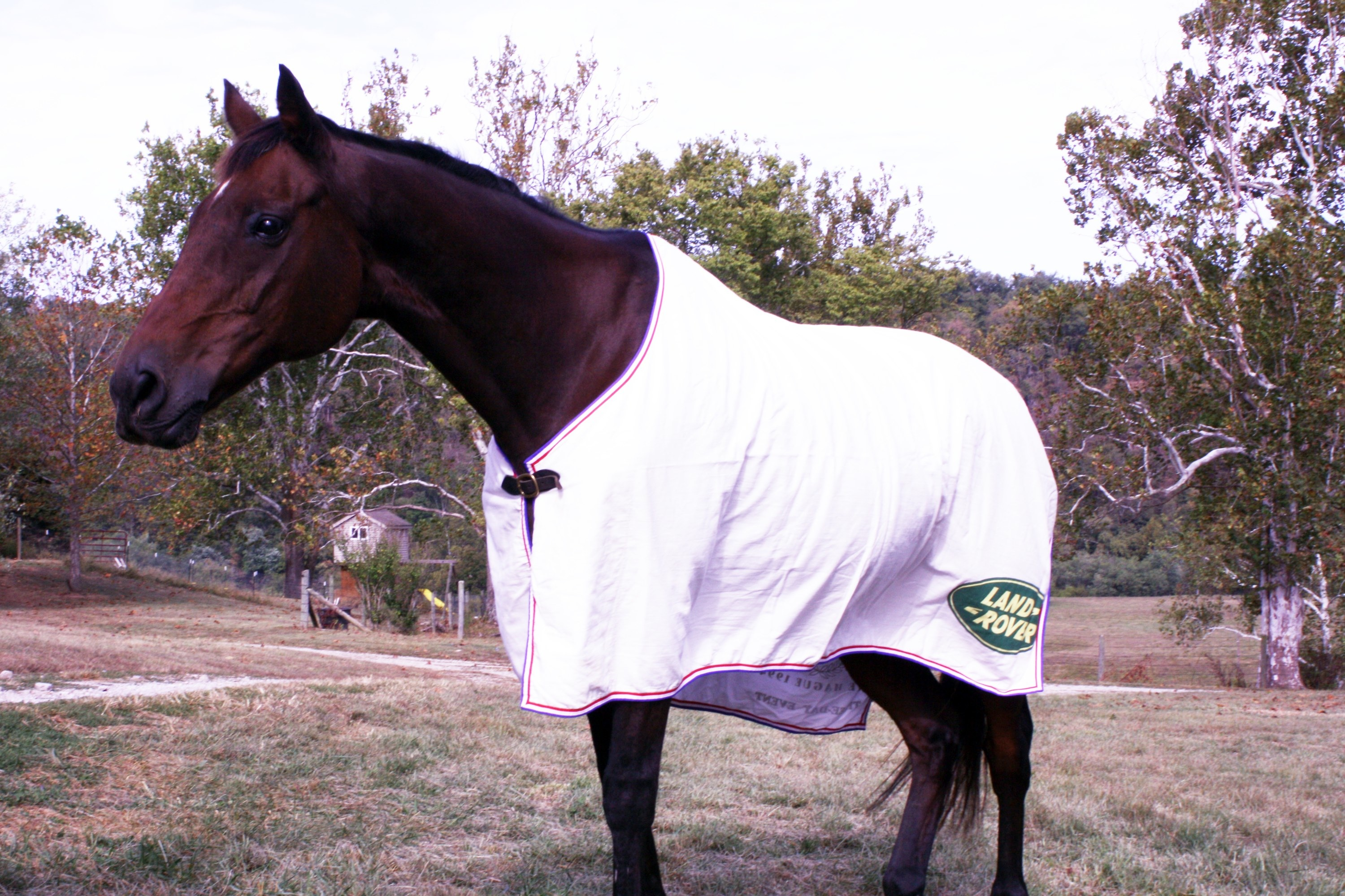 Molokai (1983–2013) partnered with Dorothy in the 1990s, shown here wearing his 1994 WEG silver medal sheet. A failed racehorse (career earnings of $720), Mo galloped and jumped into equestrian history books with Dorothy. (Photo by John Crowell)