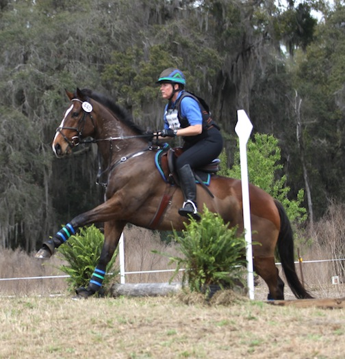 Tassimo, an off-the-track Thoroughbred, tackles Novice Horse with Dorothy at Rocking Horse Winter 1 Horse Trials (Florida). Tassimo jumped clear cross-country, finishing sixth. (Photo by John Crowell)