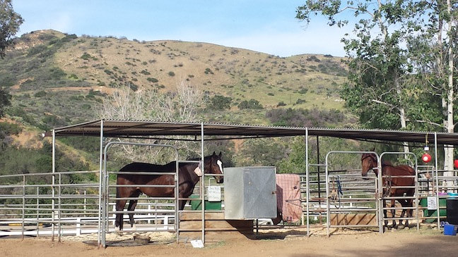 Knight's new stall is a room with a view. (Photo courtesy of Susan Friedland-Smith)